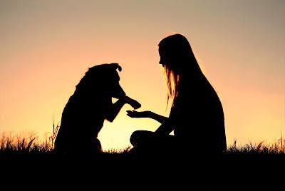 köpekler bizim dostlarımız