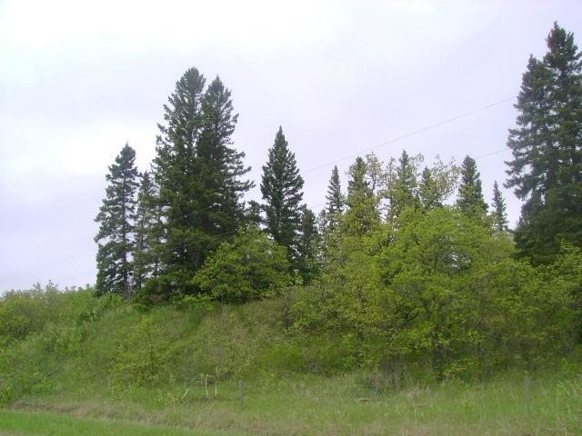 Collie Hills