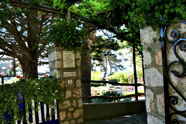 Capri, isola, alberi, vegetazione,