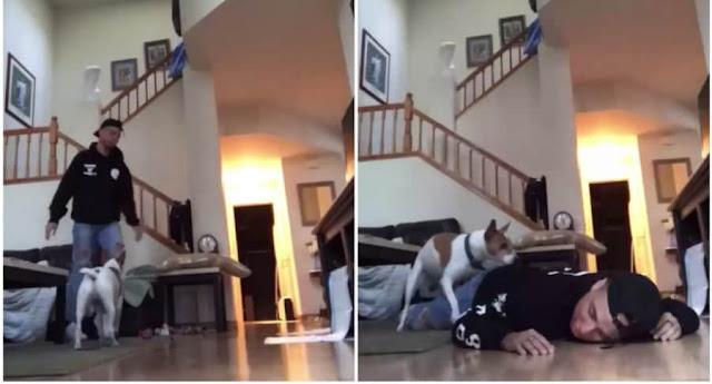 El perro que monta a su dueño, y otros videos virales de la semana