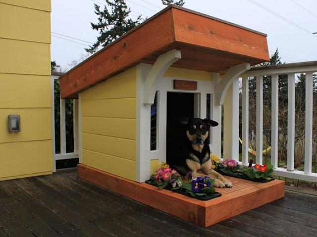 Casinha de cachorros?! Que nada, cachorro de luxo tem é mansão e até piscina!  Assim, eu até queria uma vida de cão pra mim.