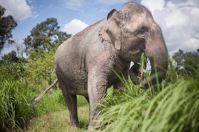 El turismo no tiene por qué ir ligado a la explotación de elefantes