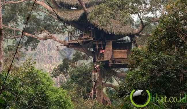 Gibbon Experience treehouse, Bokeo Nature Reserve, Laos