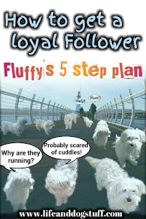 How to Get a Loyal Follower -  Fluffy's 5 step Plan to Recruit Snowy.