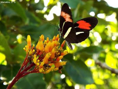 observação de borboletas, batterfly watching, borboletas, brazil, primavera, que bicho é, natureza, animais, butterfly, salto morato, unidades de conservação, indicador ambiental, nature, fundação o boticário, proteção ambiental, preservação