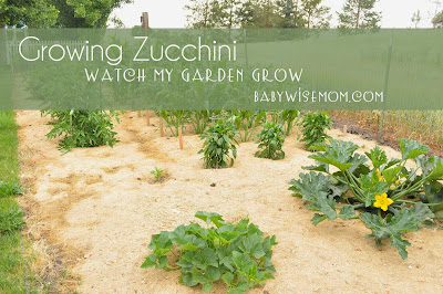 Growing Zucchini {Watch My Garden Grow Series}
