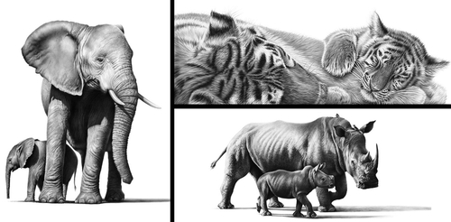00-Richard-Symonds-Wildlife-Fine-Art-Drawings-a-Painting-and-a-Video-www-designstack-co