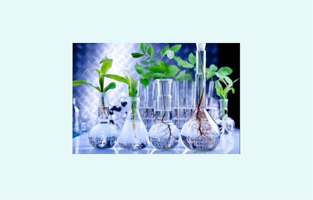 Pengertian Bioteknologi, Dampak Bioteknologi, Manfaat Bioteknologi, Jenis Bioteknologi