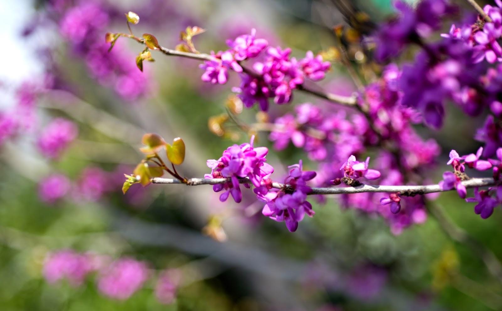 近隣の情景18(春の花木ー居住地他)