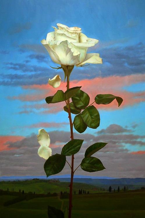 Imgenes Arte Pinturas Pinturas al leo flores de Colin Berry