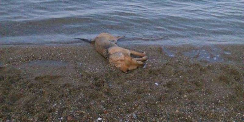 ΠΡΟΣΟΧΗ: Ρίχνουν φόλες στην παραλία της Ερέτριας