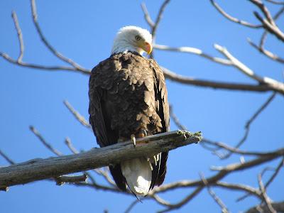 Lassen Volcanic National Park California birding hotspot