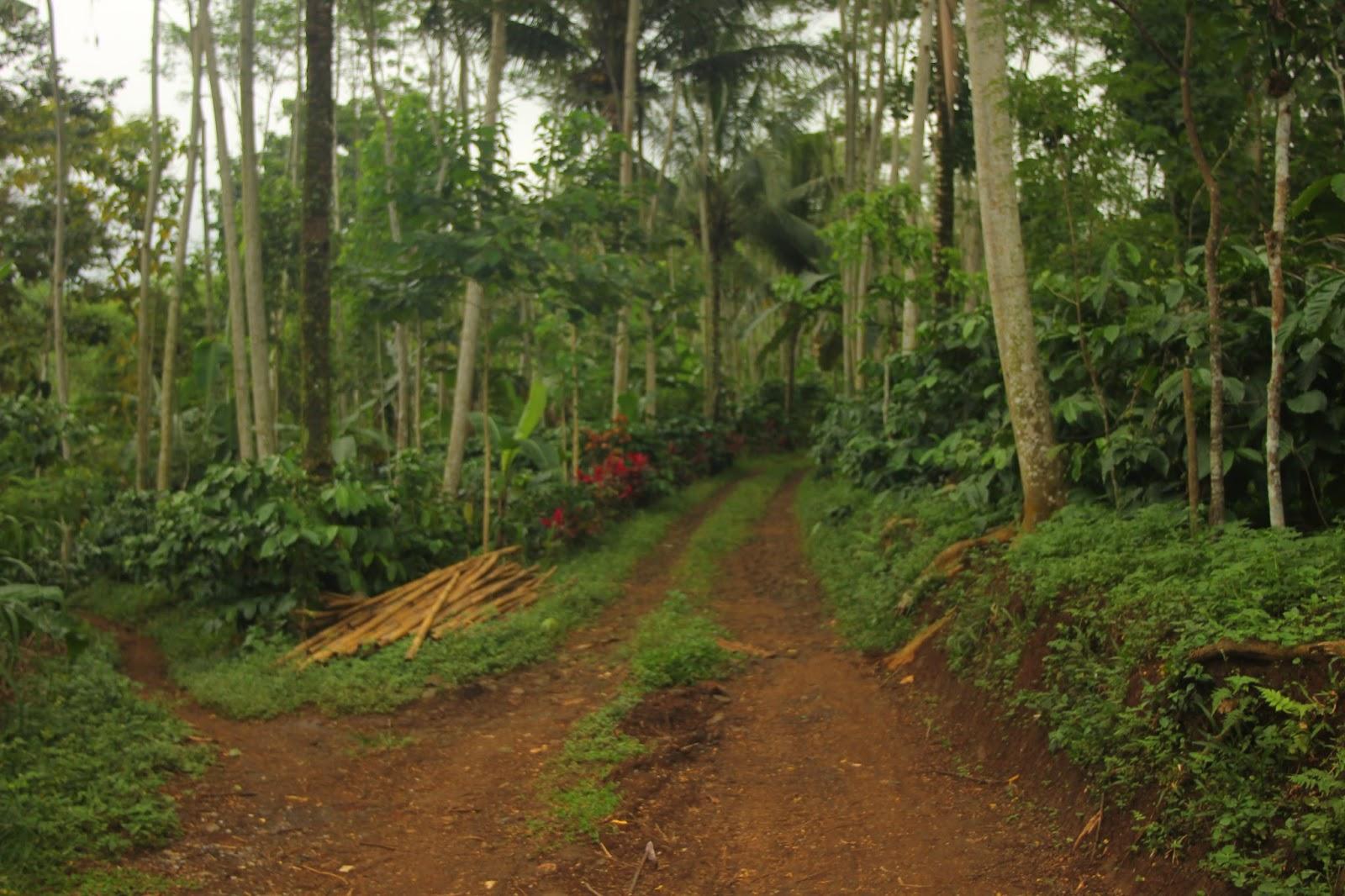 Turissendaljepit Menjelajahi Desa Dingin Gucialit Di Lumajang