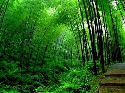Bambu dan Pakis