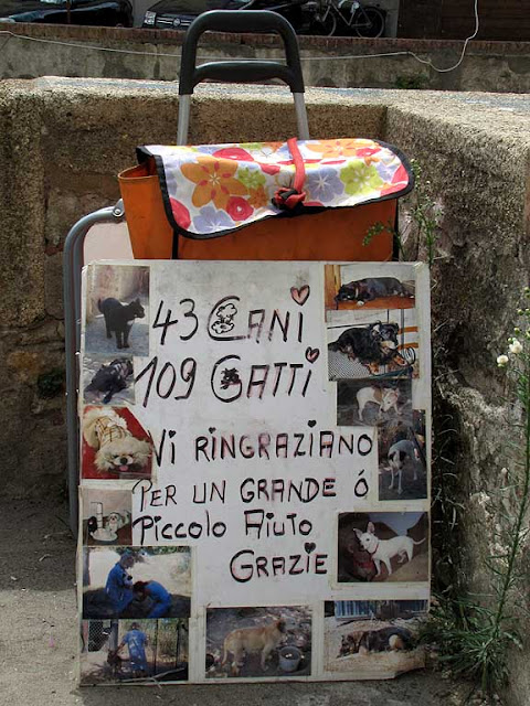43 dogs, 109 cats thank you for a little or big help, Livorno