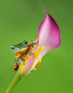 http://www.frogscapes.photos/