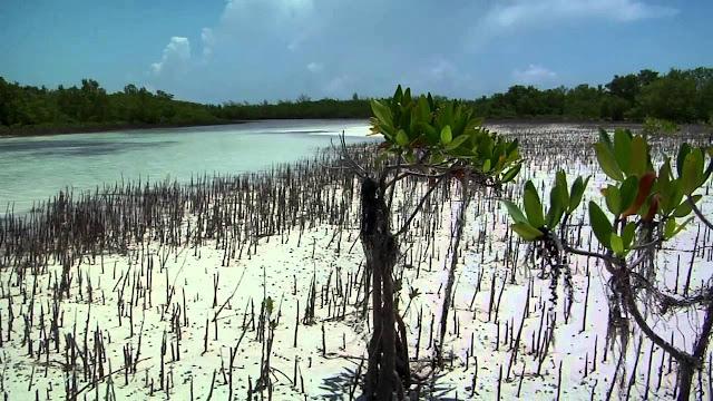 island, bird watching, swimming, sand,