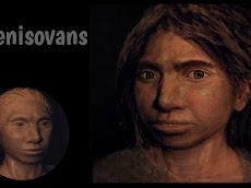 Sejarah dan Ciri-Ciri Denisovan (hominini denisova)