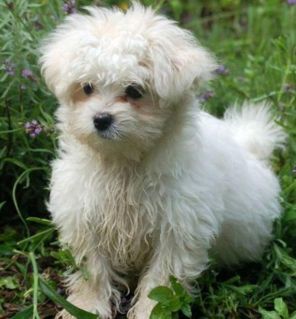Puppy Gallery Pictures