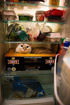 chat caché dans le frigo