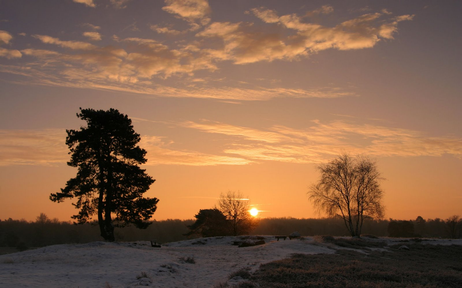 Sunset Behind Trees | Nature wallpapers,photos | cini clips
