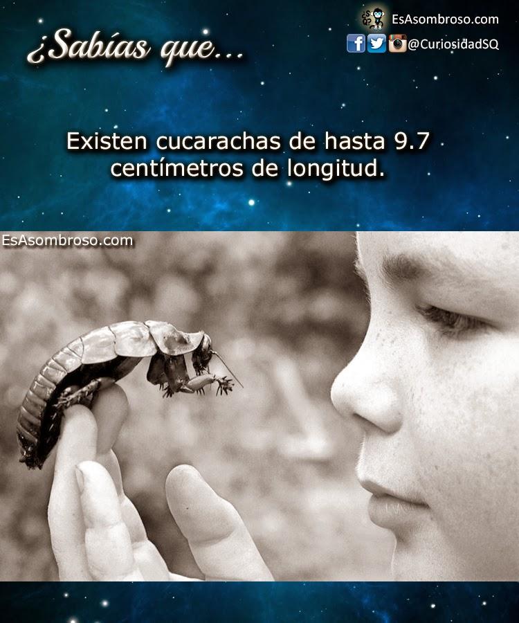 La Cucaracha Más Grande del Mundo y La Más Pesada