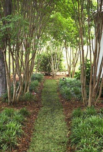 liriope lined path palmetto bluff southern gardening