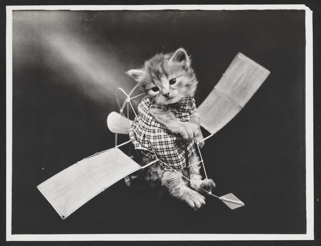 Early Photographs Of Animals In Human Situations From The