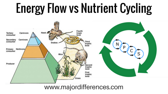 Differences between Energy Flow vs Nutrient Cycling