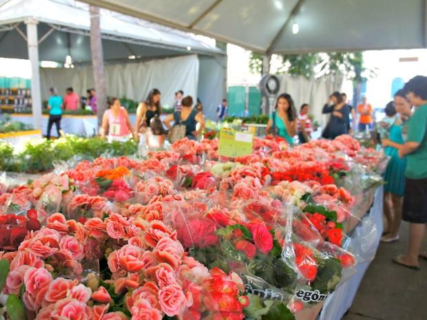 Exposição de Orquídeas e Rosas do Deserto, tradição de Cacoal acontecerá na Praça da Prefeitura. Mudas à partir de 10 reais!