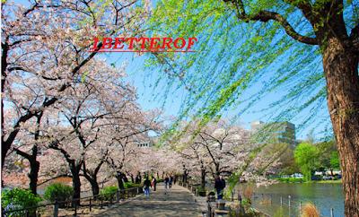 Traveling Tokyo 1