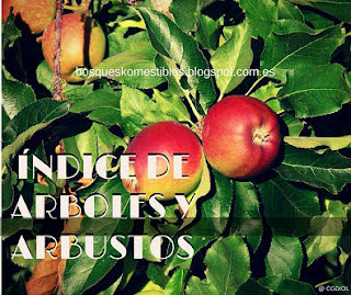 Lista de arboles y arbustos del bosque comestible mediterraneo