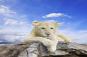 el leon cuento sobre miedos irracionales y resiliencia