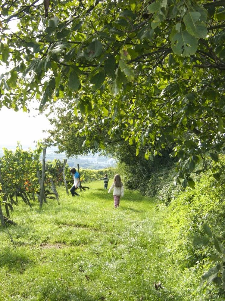 Meine Kinder in den Weinbergen des Letzenbergs