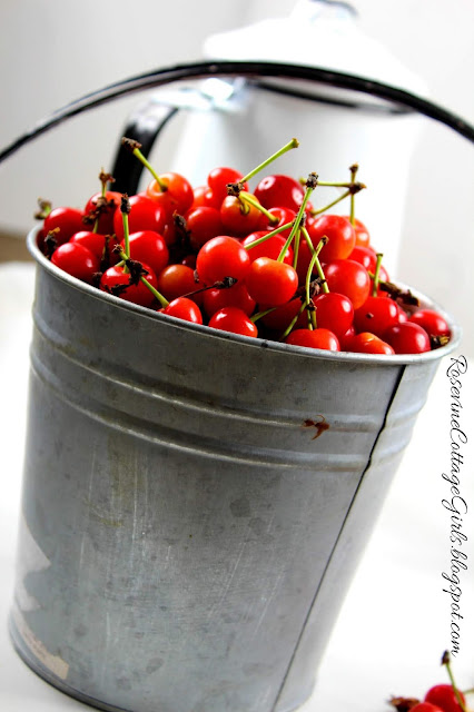 Bucket of red cherries by RosevineCottageGirls.com