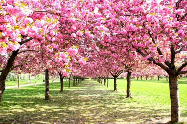 4. New York City, USA - Top 10 Blooming Cities in Spring