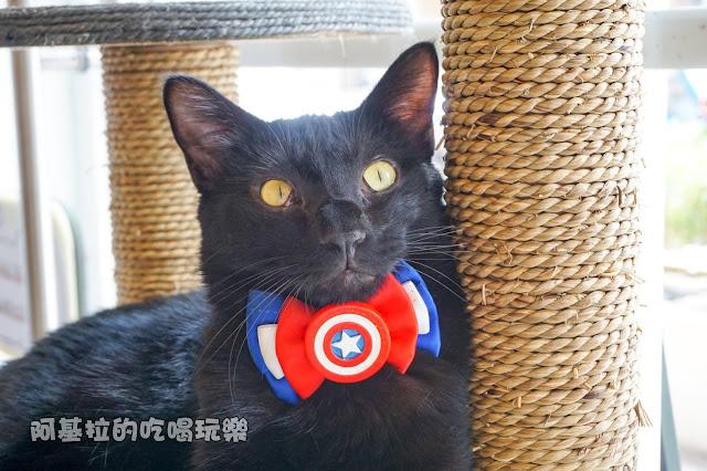 14589777 1099288063457771 2977198917533738610 o - 熱血採訪 朵貓貓咖啡館 - 貓咪餐廳