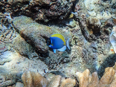 Snorkeling - Gili Meno