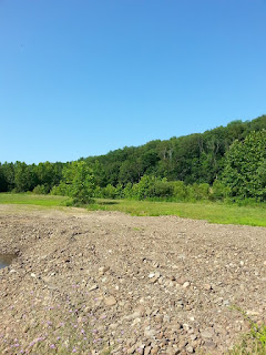 Bloomsburg quarries for sale