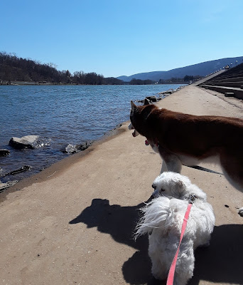 Talk your dog for a walk along the William  Clinger Riverwalk in Lock Haven, PA   Dogs, Dog friendly travel destination in Pennsylvania