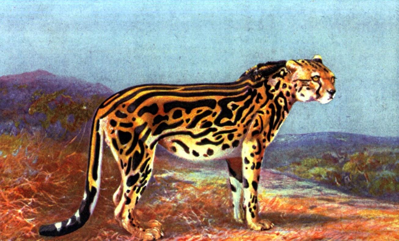 shukernature the mpisimbi a now extinct king cheetah cheetah clip art images cheetah clip art stencil