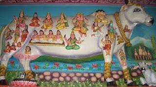 Vaca sfântă din India