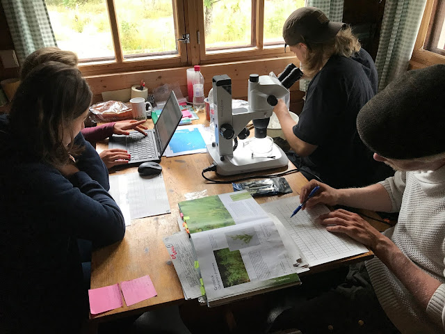 Neljä tiimiläistä pienen pöydän ääressä. Pöydällä mikroskooppi, tietokone ja lajintunnistusopas.