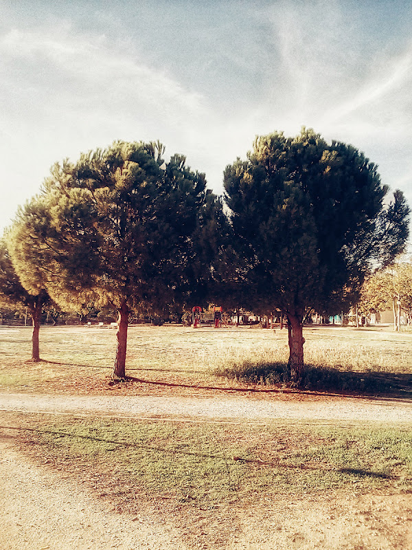 Two Trees, photograph by Kostas Gogas.
