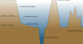 A view from the bog abyssal plain definition facts for Ocean floor features definition