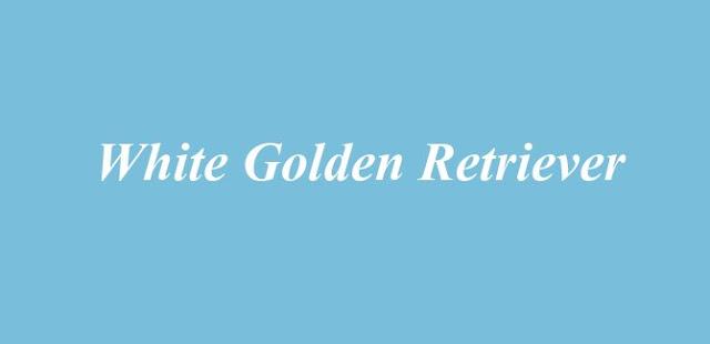 White Golden Retriever - Myth Or Reality?
