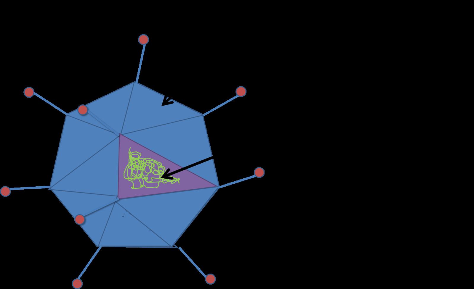 El Salón Estructura De Los Virus