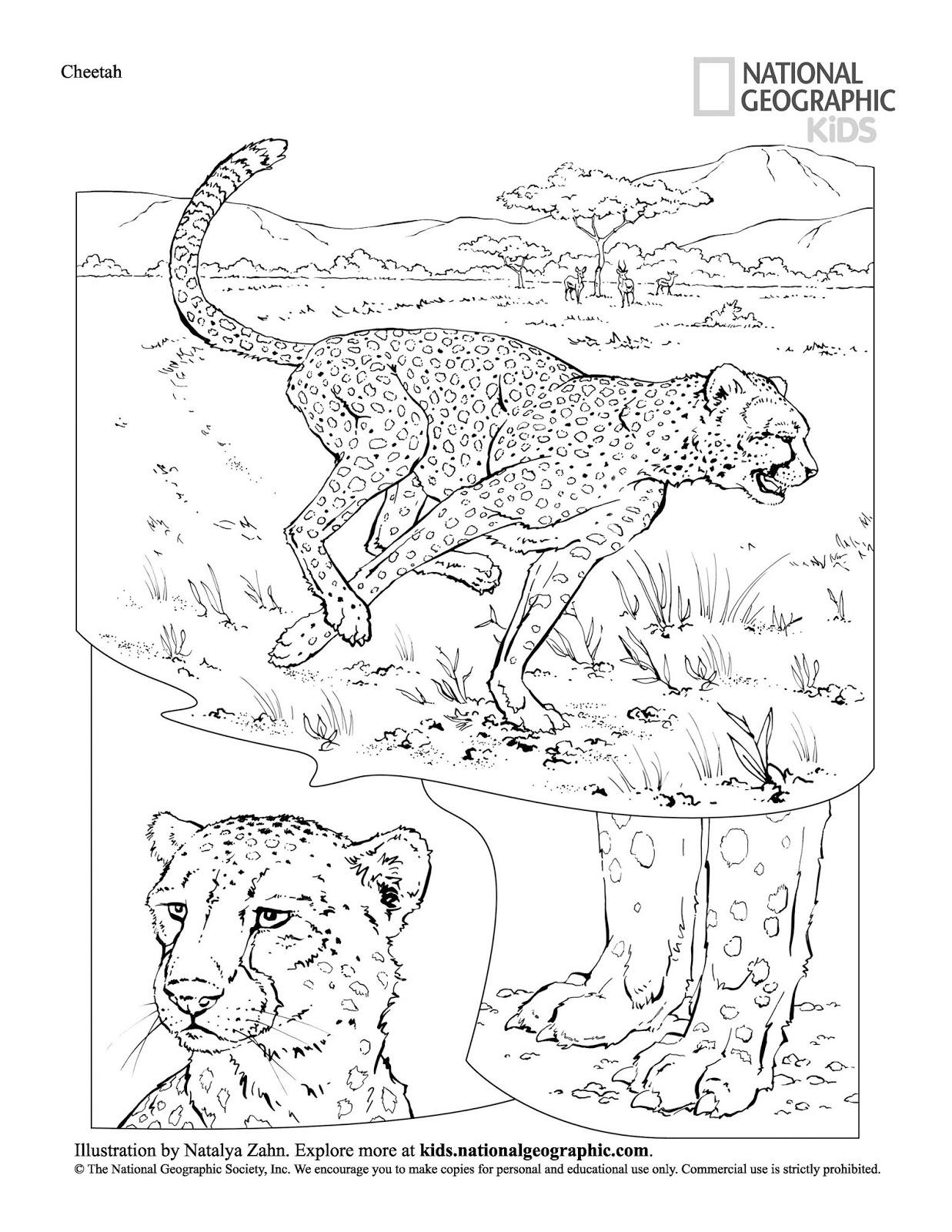 c3 a1guia para colorir livro de colorir animais grÁtis para baixar