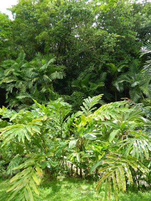 Palms at Orchid World in Barbados by garden muses-not another Toronto gardening blog