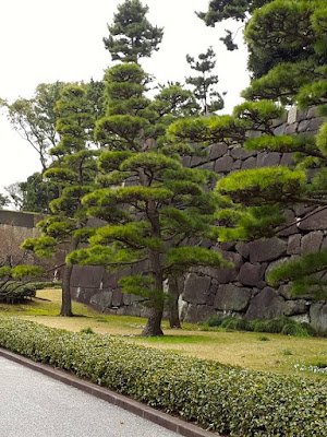 Bonsai trees at the East Gardens of Imperial Palace Tokyo